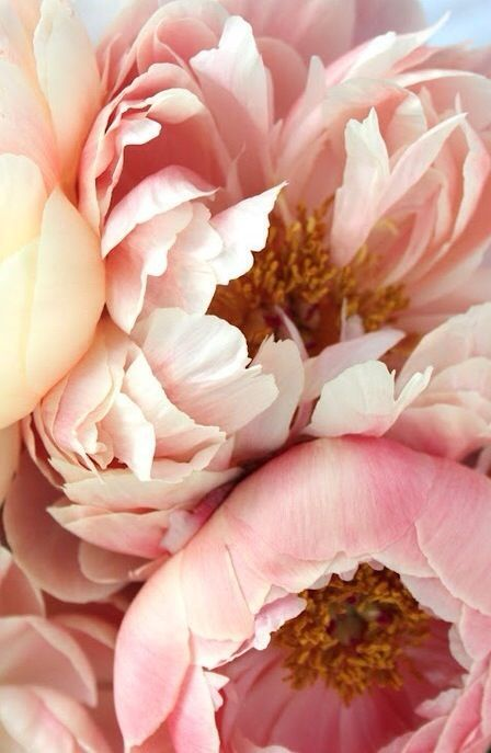 Inspiration collection So Lovely Aurore Gwladys Peonies